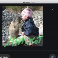 troquer avec marmot, sur mytroc
