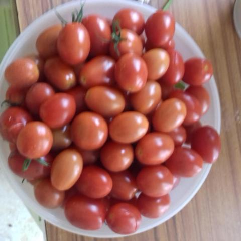 troc de  tomate cerise, sur mytroc