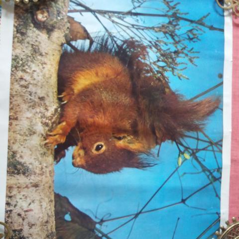 troc de  Affiche écureuil, sur mytroc