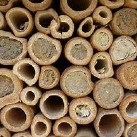 troc de  Cachette à insectes bambous, sur mytroc