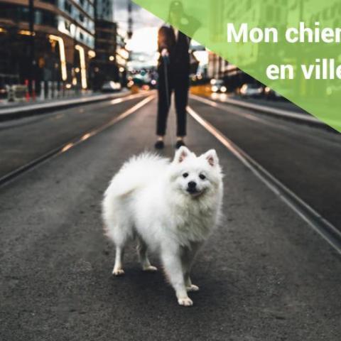 troc de  Promener et passer du temps avec votre chien, sur mytroc