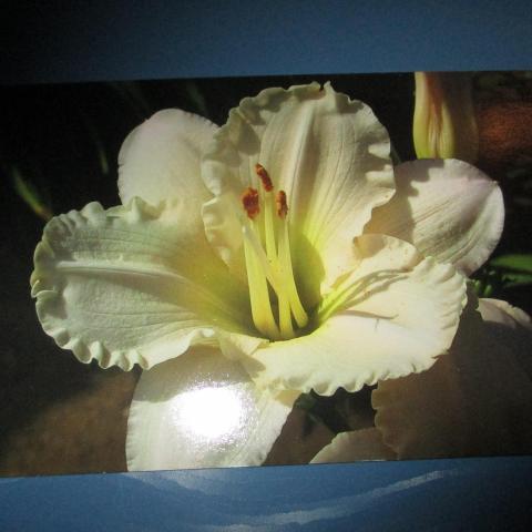 troc de  carte double neuve avec fleur blanche, sur mytroc
