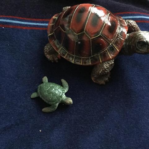 troc de  tortues, sur mytroc