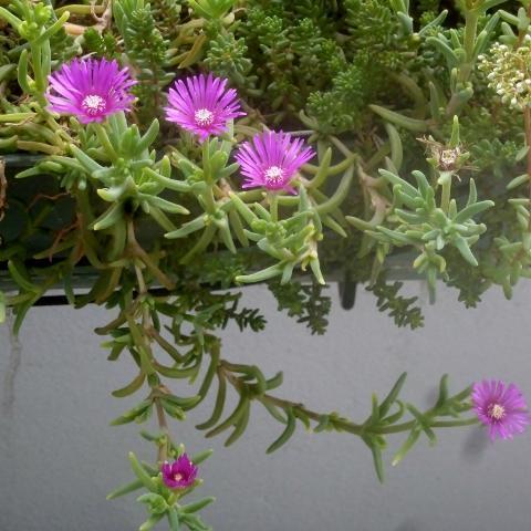 troc de  plantes succulentes, sur mytroc
