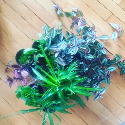 troc de  URgent troc plantes, sur mytroc