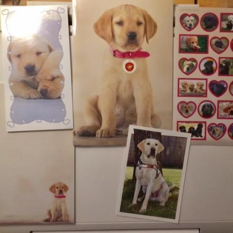 troc de  Réservé Lot pour les amoureux des chiens Labrador :-), sur mytroc