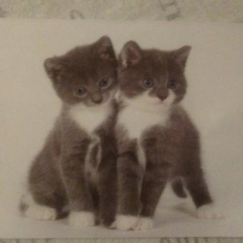 """troc de  Carte """"chats"""". Réservée., sur mytroc"""