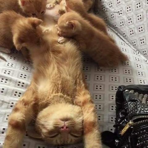 troc de  Garde de chats week-end, sur mytroc