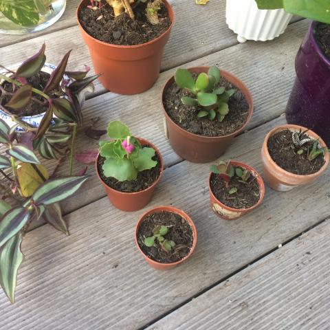 troc de  Plantes / succulentes, sur mytroc