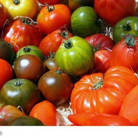 troc de  Graines de tomates diverses, sur mytroc