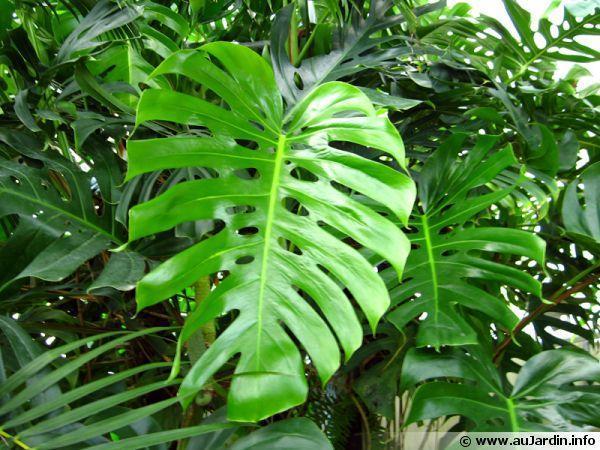 troc de troc arrosage de plantes image 0