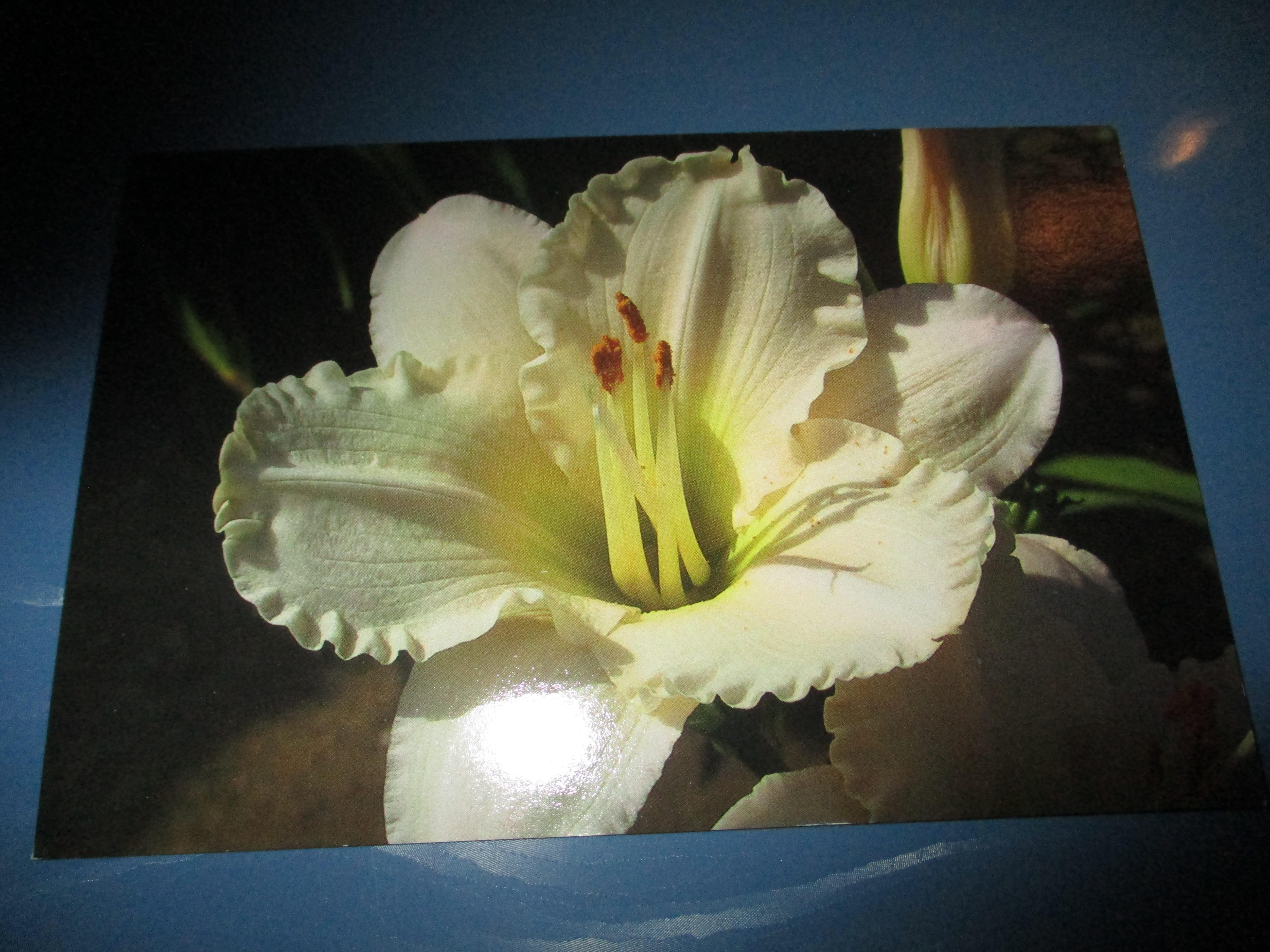 troc de troc carte double neuve avec fleur blanche image 0