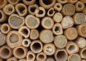 troc de troc cachette à insectes bambous image 0