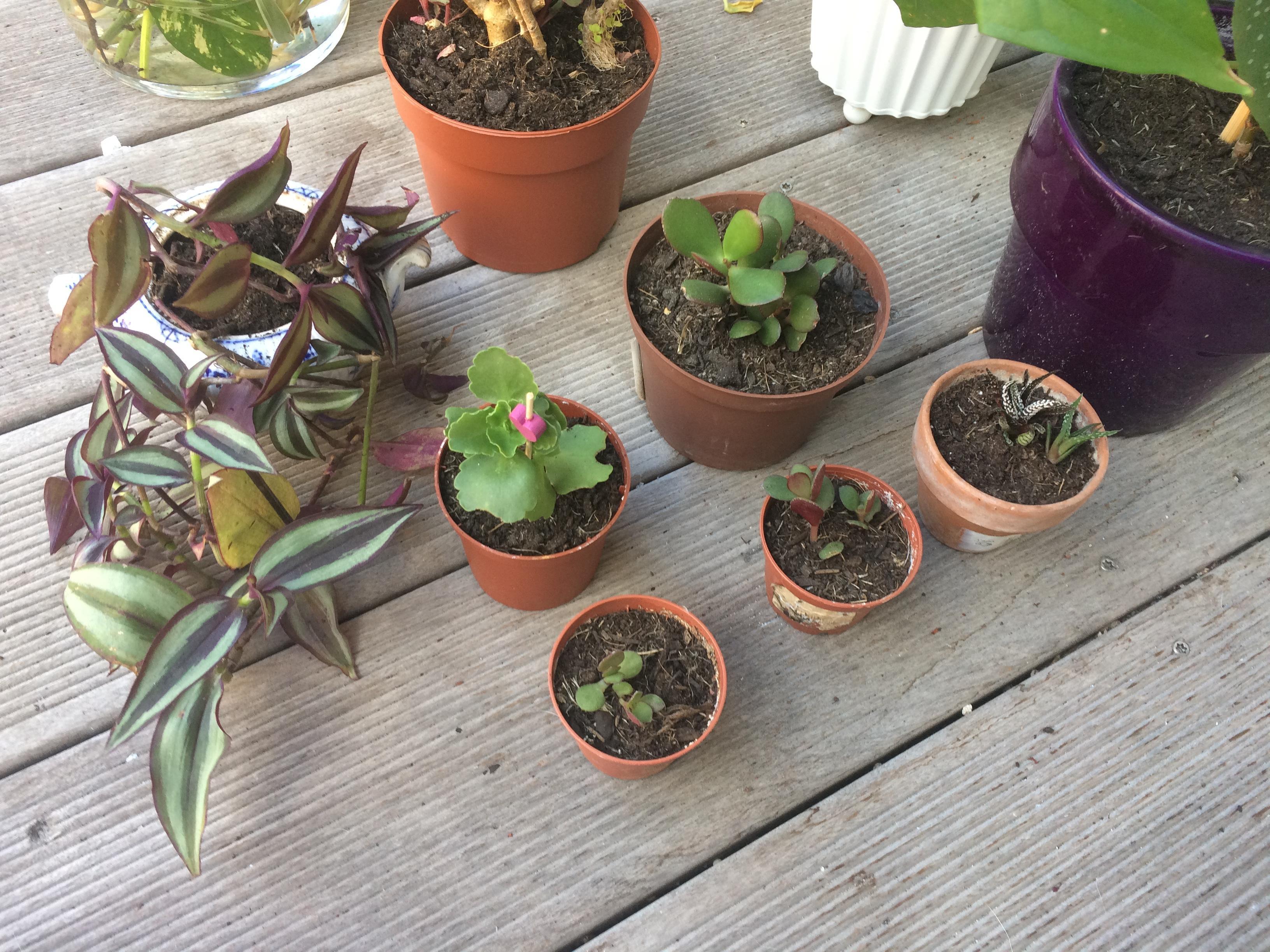 troc de troc plantes / succulentes image 0