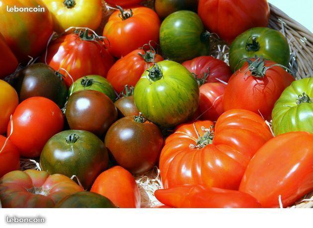 troc de troc graines de tomates diverses image 0