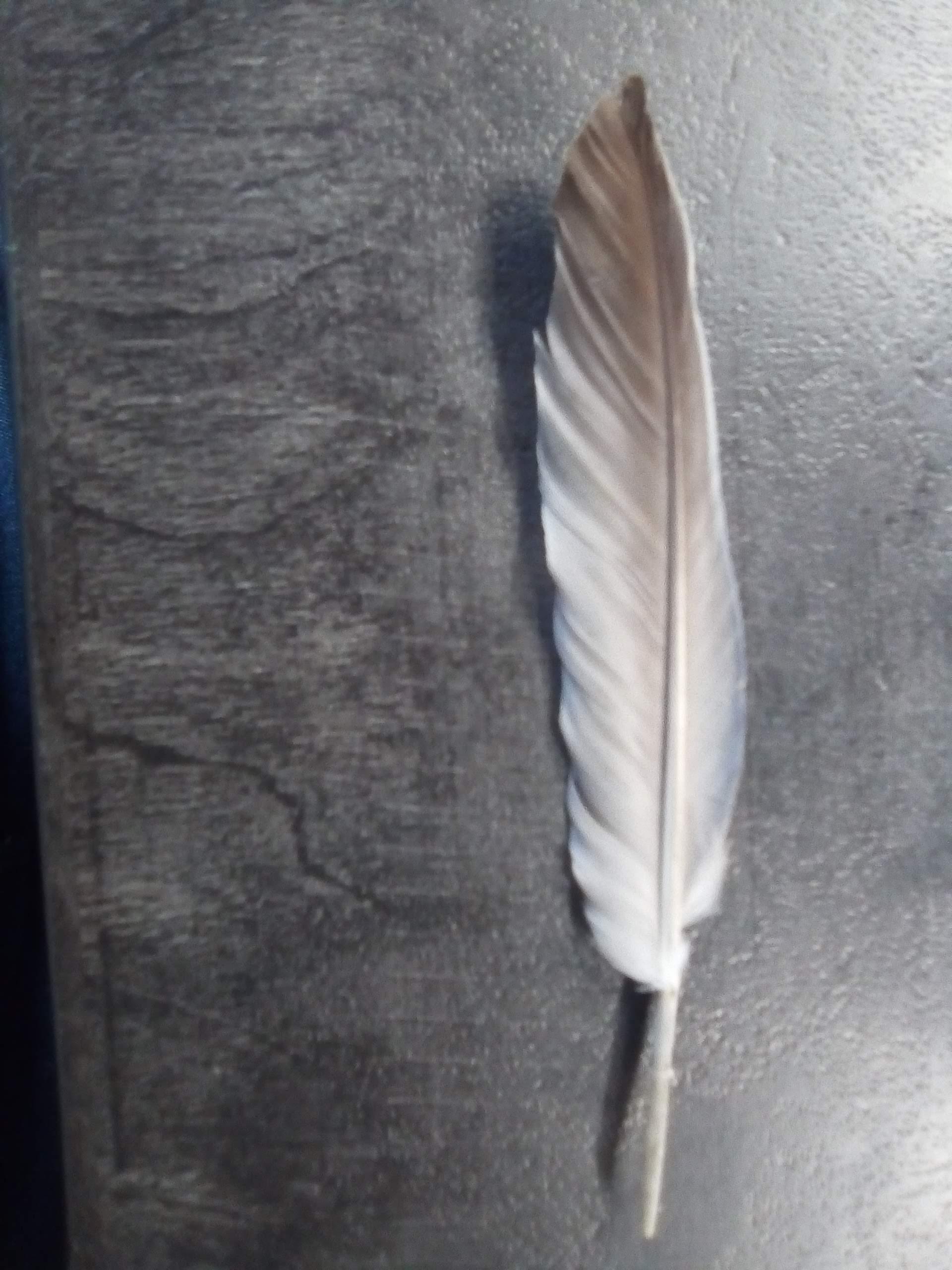 troc de troc plume naturelle image 0
