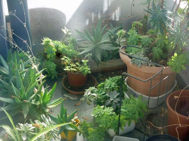 troc de troc plantes succulentes image 1