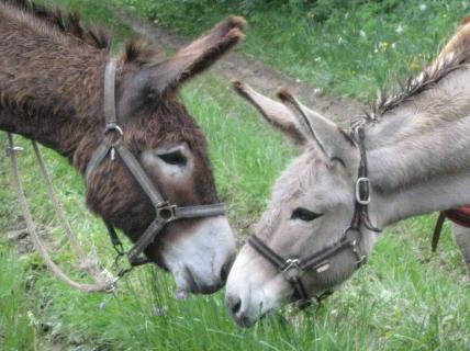 """troc de troc """"bon cadeau"""" pour une randonnée avec un âne image 1"""