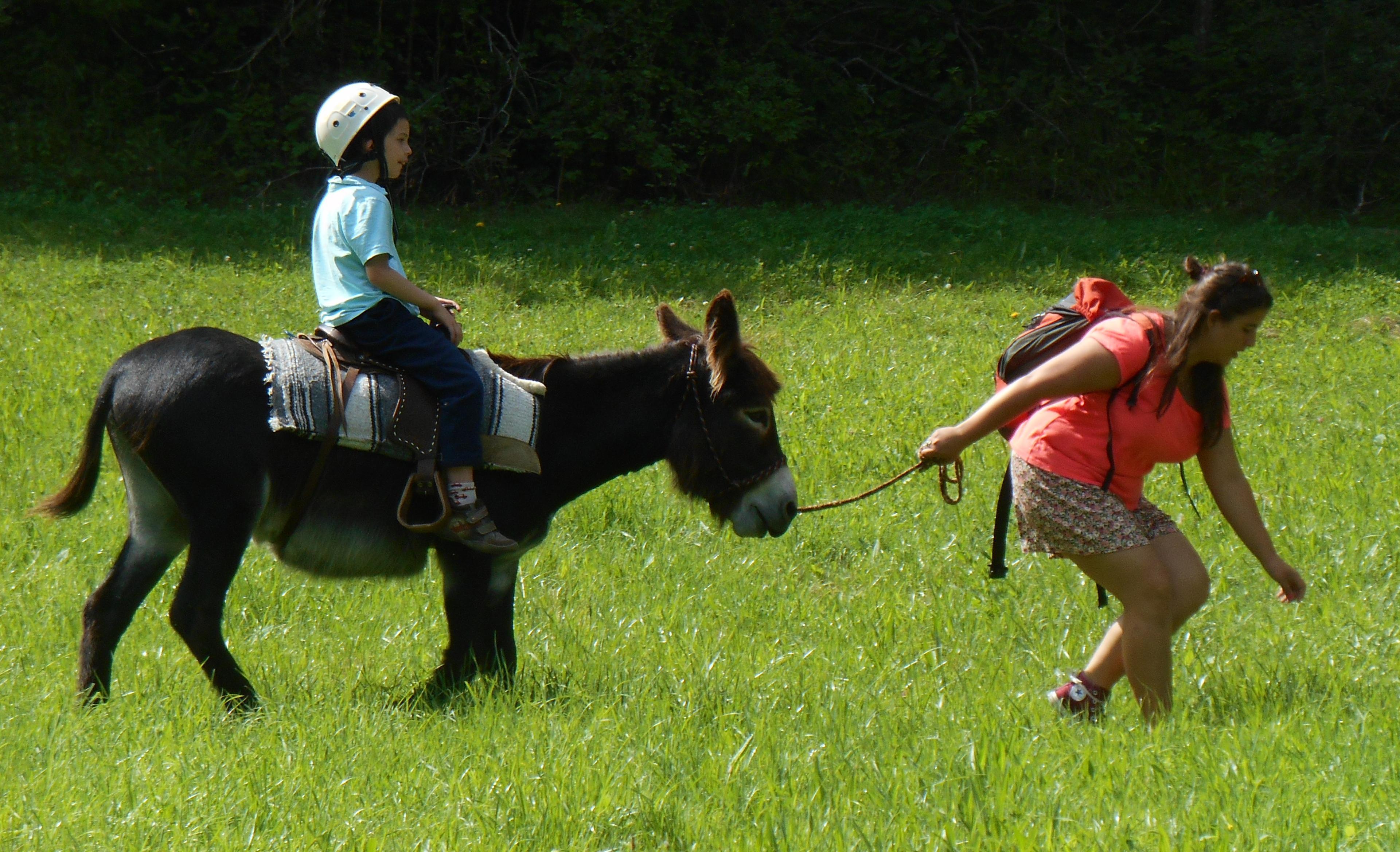 """troc de troc """"bon cadeau"""" pour une randonnée avec un âne image 2"""