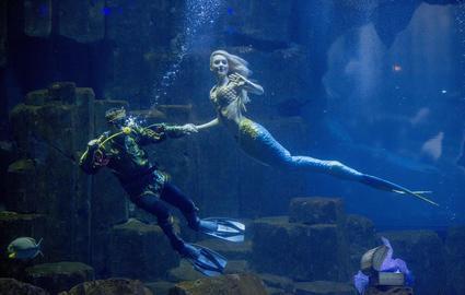 troc de troc * réservé * pass famille aquarium de paris image 1