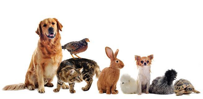troc de troc garde d'animaux image 0