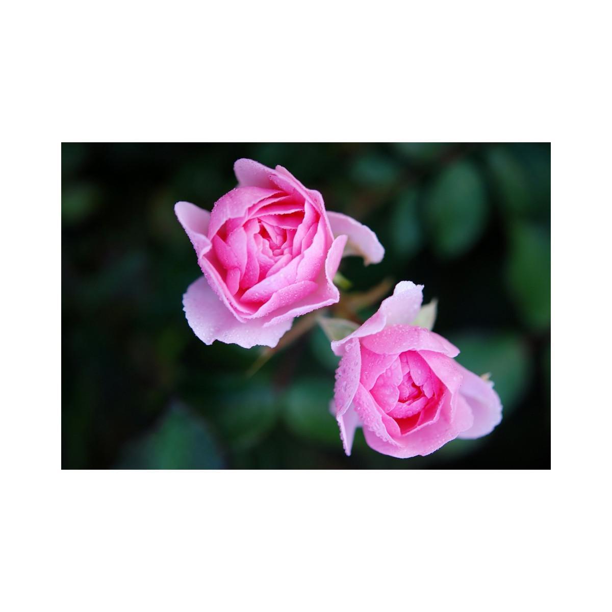 troc de troc je recherche de l'hydrolat de rose image 0