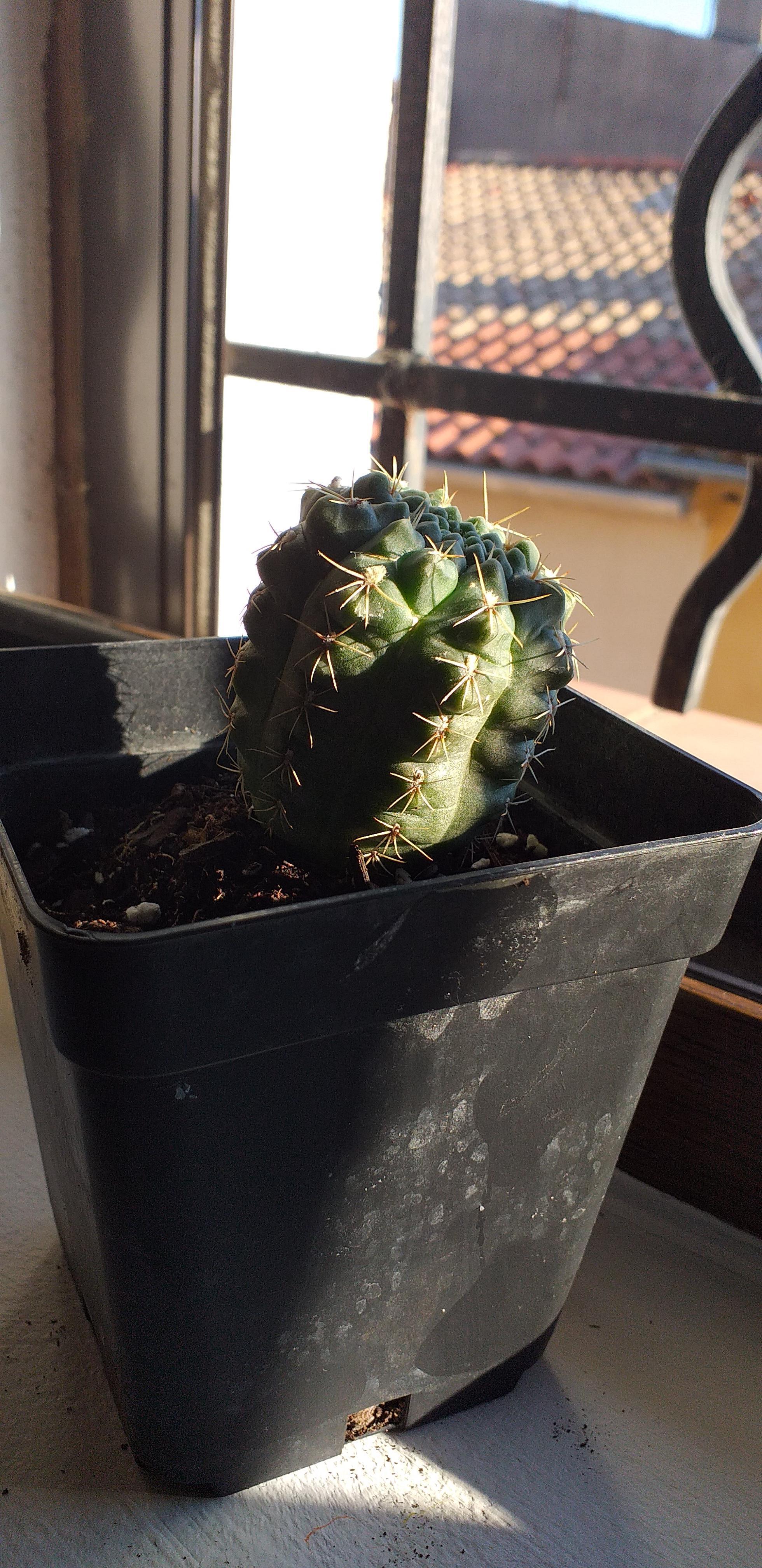 troc de troc cactus image 0