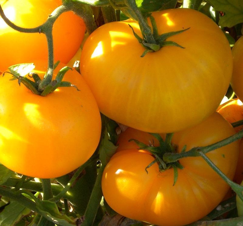 troc de troc ruptures graines de tomates lemon boy image 0