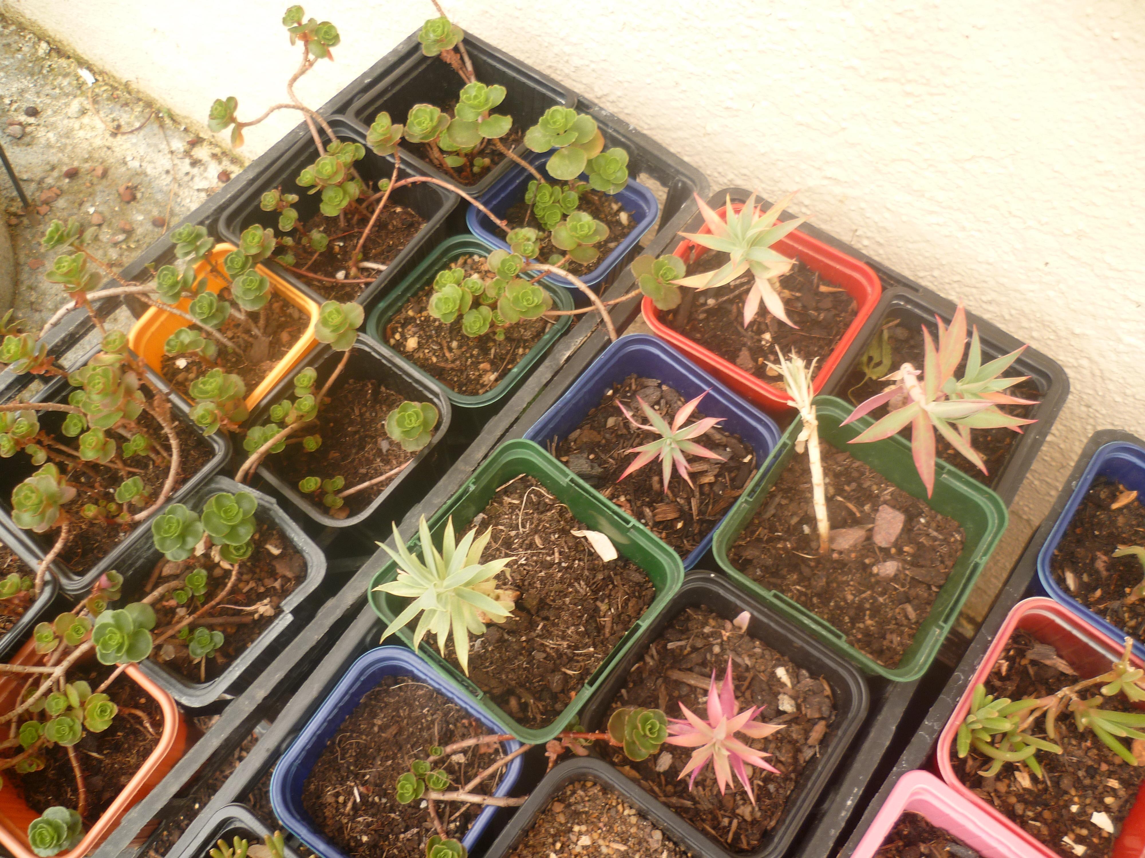 troc de troc boutures de succulentes image 0