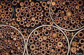 troc de troc cachette à insectes bambous image 1