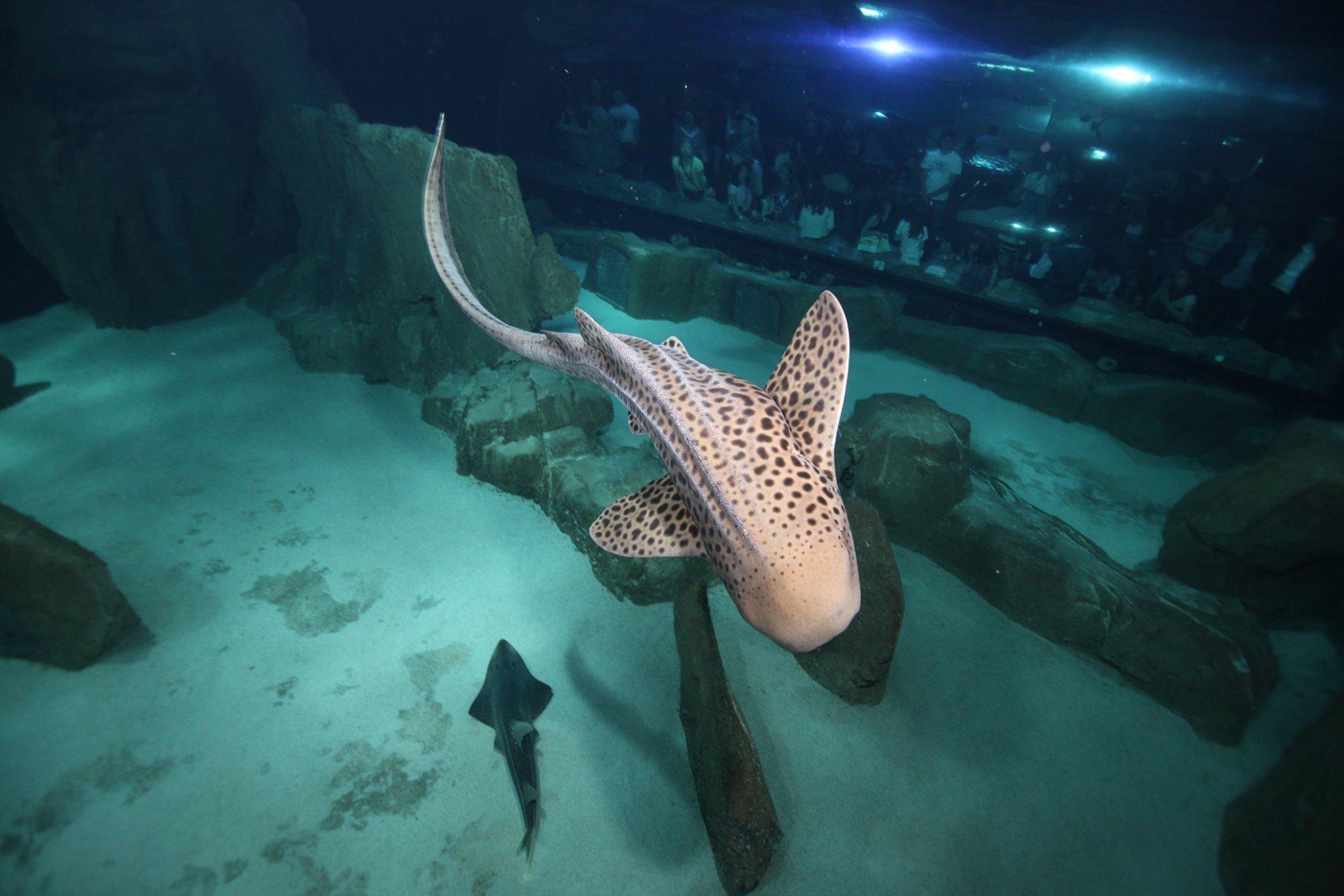troc de troc * réservé * pass famille aquarium de paris image 2