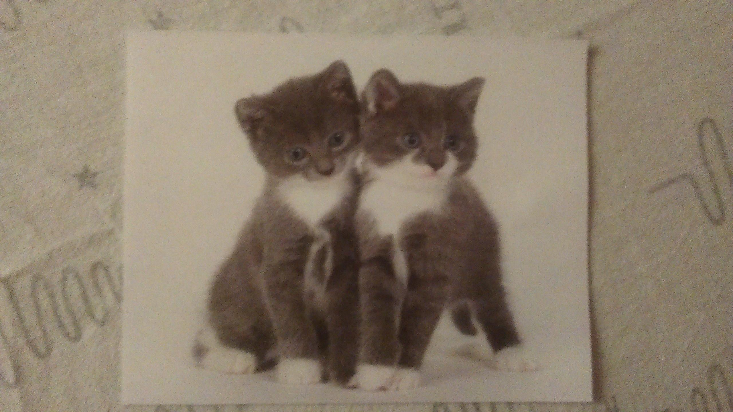 """troc de troc carte """"chats"""". réservée. image 0"""