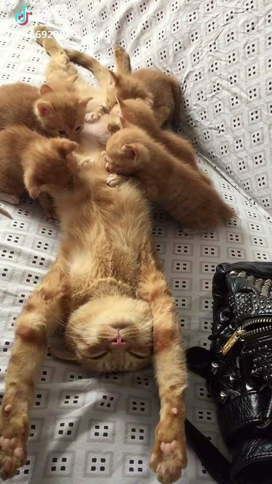 troc de troc garde de chats week-end image 0