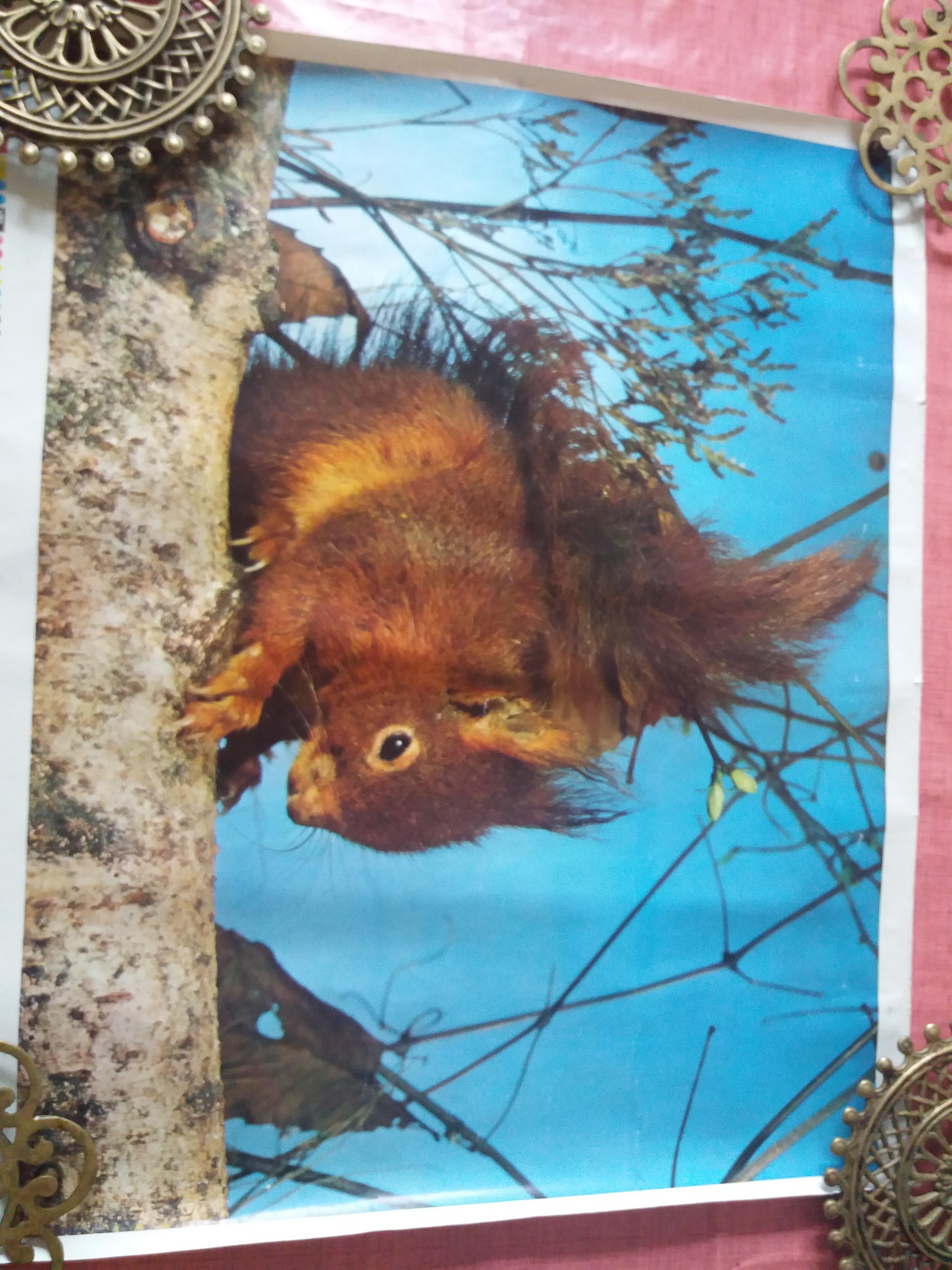 troc de troc affiche écureuil image 0