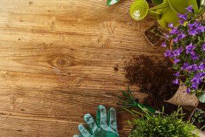 troc jardin et plantes